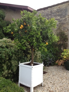 Quite a few chateaux had orangaries - we loved seeing the orange and lemon trees.