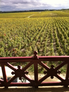 The vineyards.