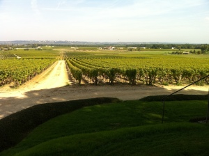 Overlooking the vineyards of Chateau d'Yquem.